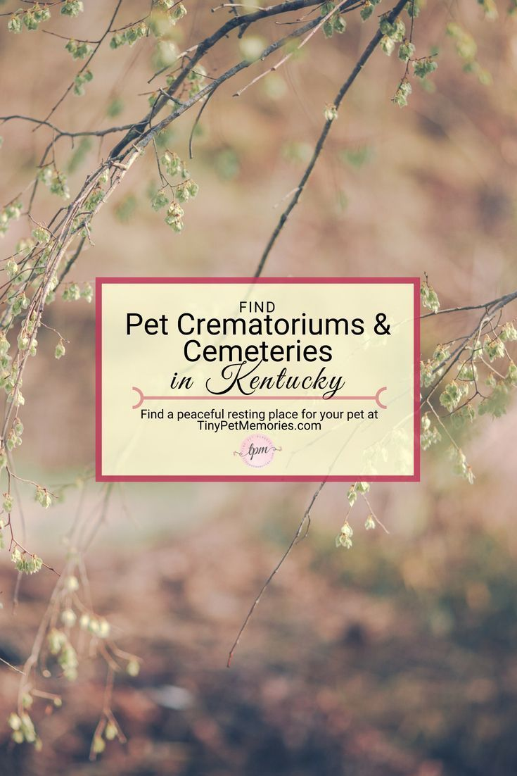 Looking For A Peaceful Way To Lay Your Petlove To Rest Find Petcemetery Or Petcrematorium Kentucky On Tinypetmemori Cemeteries Pet Cemetery Pet Memorials