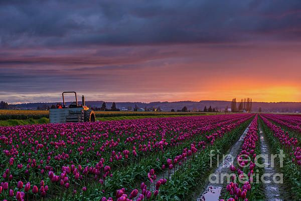 Sunset Light on a Tractor in the Skagit Valley Photography by Mike Reid