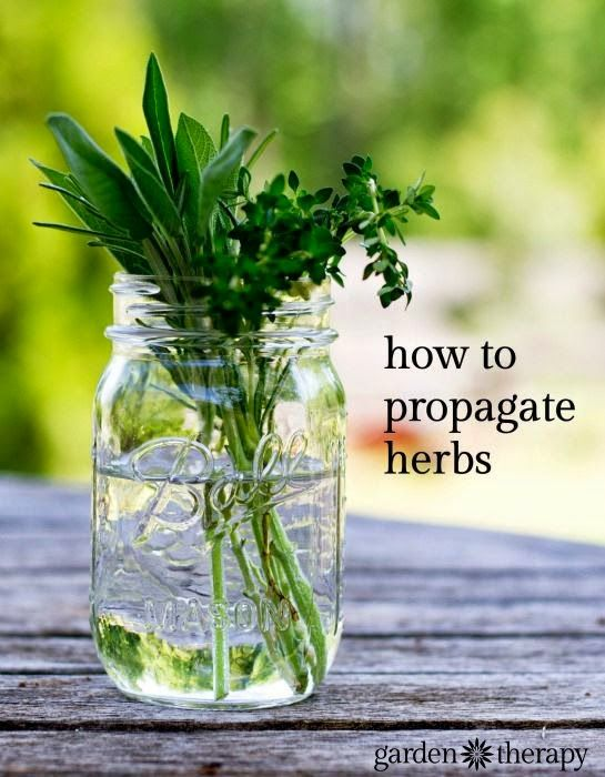 Here is an easy way to propagate your own herb garden.