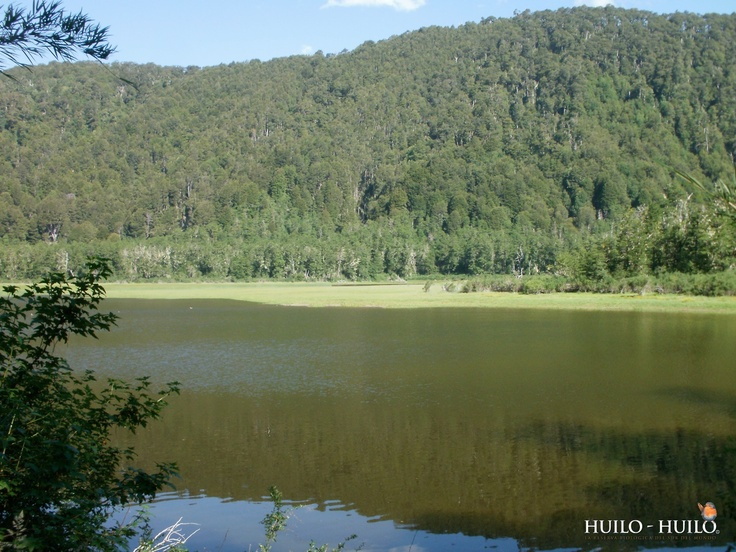 Sendero Los Planchados y Laguna Los Patos Huilo Huilo