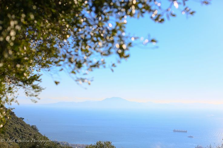 gibraltar, monkies, gibraltar monkies, apina, apinat, lilychristina, lilychristina photography