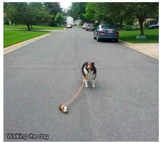 """He'll walk your dog for you. 