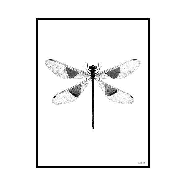 Poster Spotted Dragonfly & Ram 30x40cm - Vanilla Fly - Vanilla Fly - RoyalDesign.se