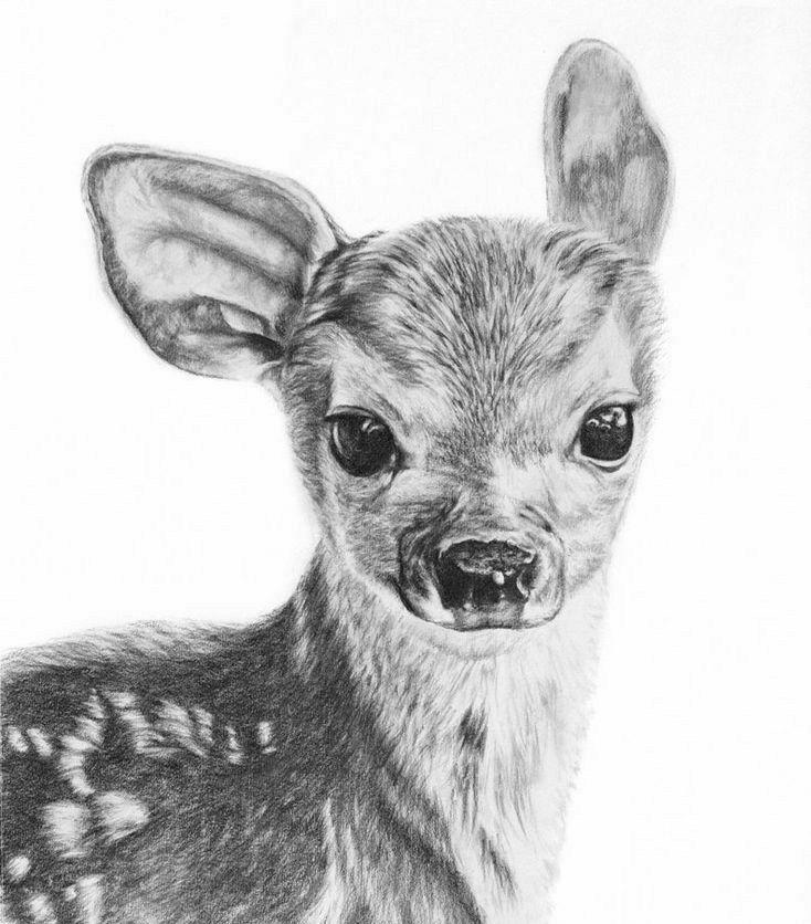 Custom Pet Drawing Custom Pet Portrait Dog Memorial Cat Etsy In 2020 Baby Animal Drawings Realistic Animal Drawings Pencil Drawings Of Animals