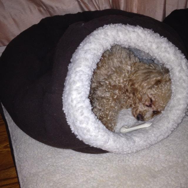 7 best Dog Beds images on Pinterest   Pet beds, Dog cat ...