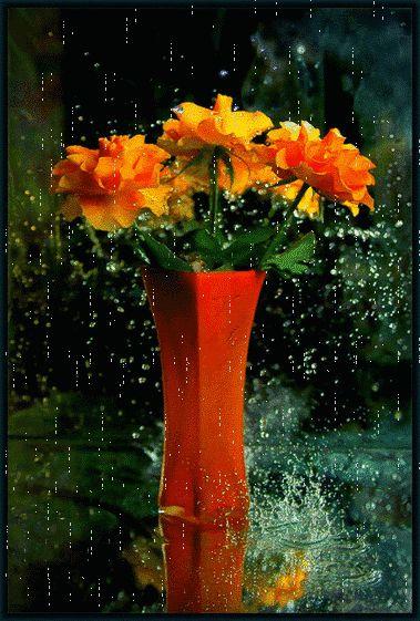 Rain Falling - Gifs  ♡ ~ Ʀεƥɪииεð╭•⊰✿ © Ʀσxʌиʌ Ƭʌиʌ ✿⊱•╮