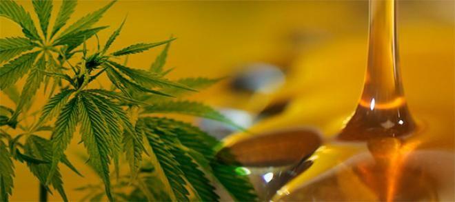 Aceites y Beneficios: Aceite de Cannabis beneficios y riesgosLas propied...