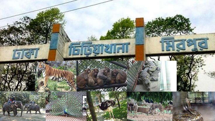Beauties of Bangladesh National Zoo || Mirpur Chiriakhana || Bangladesh National Zoo Dhaka Beauties of Bangladesh National Zoo || Mirpur chiriakhana || Bangladesh National Zoo Dhaka Located in the Mirpur section of the capital city of Bangladesh the Bangladesh National Zoo is home to more than 2000 animals from 165 species and is a popular place to spend the day both for local and international visitors. Established in 1974 the Bangladesh National Zoo has been developed and improved over the…