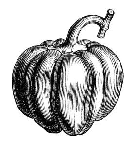 black and white clip art, bell pepper clipart, chili pepper clipart, vintage food illustration, vegetable graphics, public domain food