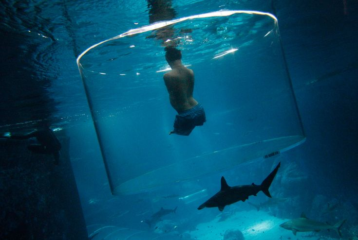 Nick Vujicic, an Australian motivational speaker who was born without limbs, swims with sharks at the Marine Life Park in Singapore on Sept. 5. Vujicic dived with sharks in a customized acrylic enclosure that takes in a 360-degree view of the shark habitat at the aquarium. Vujicic is in Singapore to give a motivational talk to a 5,000 strong audience. (Edgar Su/Reuters) #