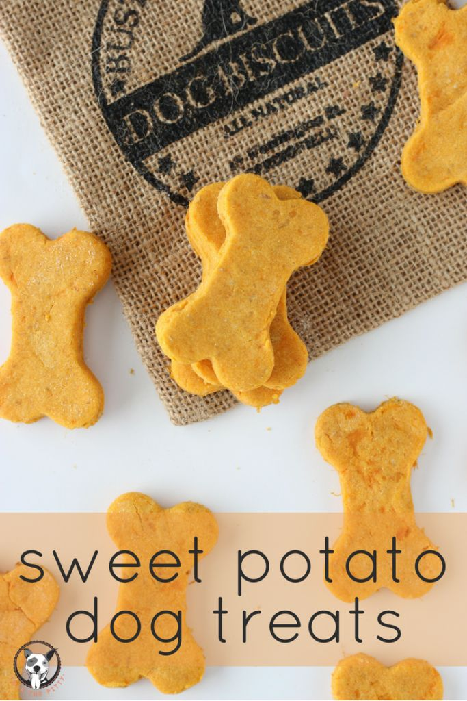 (Super simple!) Sweet Potato Dog Treat Recipe - your pooch will love these homemade dog biscuits! Plus, they're healthy! Packed with vitamins and Omega 3 from the sweet potato and flaxseed. View recipe on lolathepitty.com