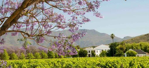 De Wetshof Vineyards in Fine Form Before a Happy Landing