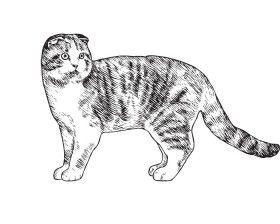 Породы кошек. Описание и фото домашних кошек. Популярные породы кошек в…
