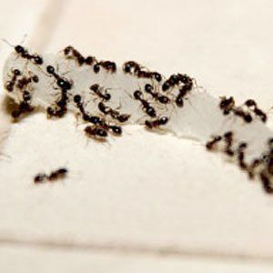 How To Control Household Bugs  http://www.rodalesorganiclife.com/home/how-control-household-bugs?cm_mmc=pinterest-_-OrganicGardening-_-Content-Living-_-controlhouseholdbugs