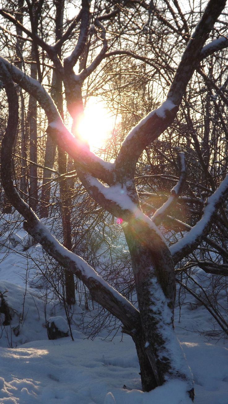 WINTER SUN ( E L )