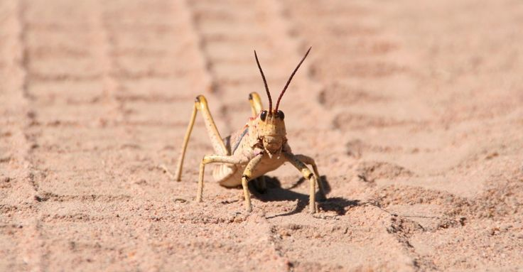 Gas compressors in New Mexico seem to mess with some arthropods' behavior.