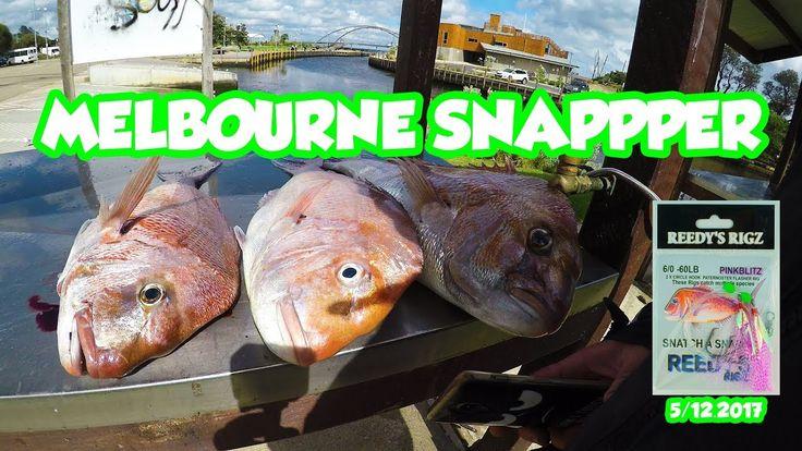 Melbourne Snapper Port Phillip Bay Big Reds vs Reedy's Rigz  Sounding Re...