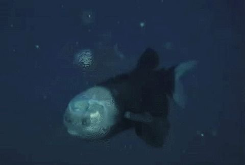 There's some weird-ass shit in the deep sea...
