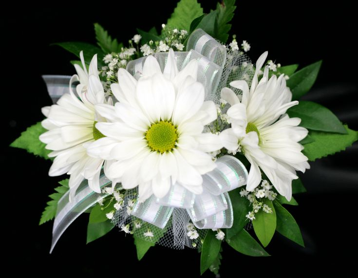 Prom - Three Daisy Wrist Corsage - Columbus OH Florist - Flowerama Columbus - Same Day Flower Delivery