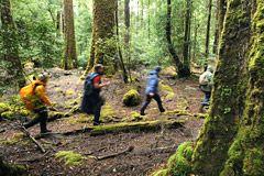 Tarkine Rainforest Track
