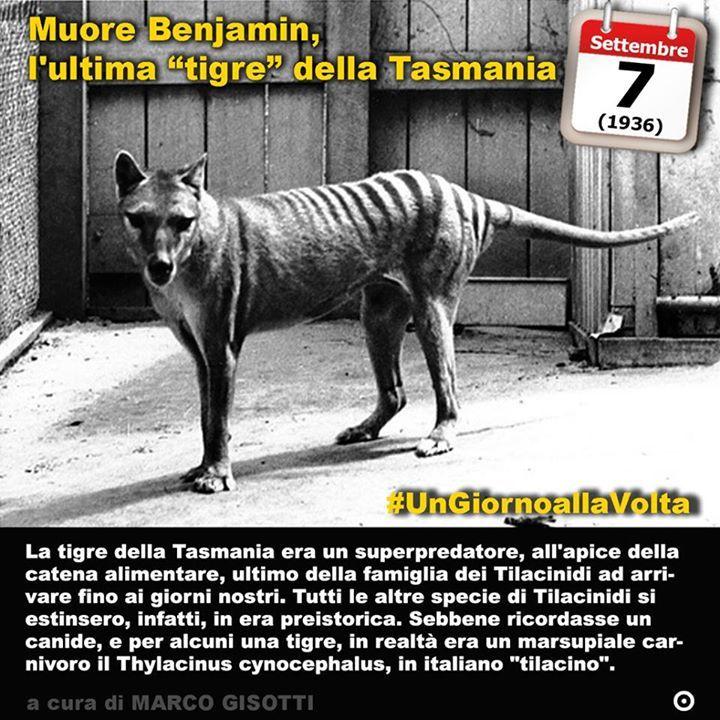 """7 settembre 1936: si estingue l'ultima """"tigre"""" della Tasmania  Immaginate una tigre che tigre non è. Immaginate una tigre che non c'è più. Si tratta del destino di molte specie animali che l'uomo ha visto estinguersi dalla sua comparsa sulla Terra. La tigre della Tasmania infatti non è mai stata una tigre e nemmeno un felino. Ma neanche un lupo sebbene a livello popolare sia stata chiamata anche """"lupo della Tasmania"""". Diciamo che del suo nome l'unica cosa realistica era la provenienza dalla…"""