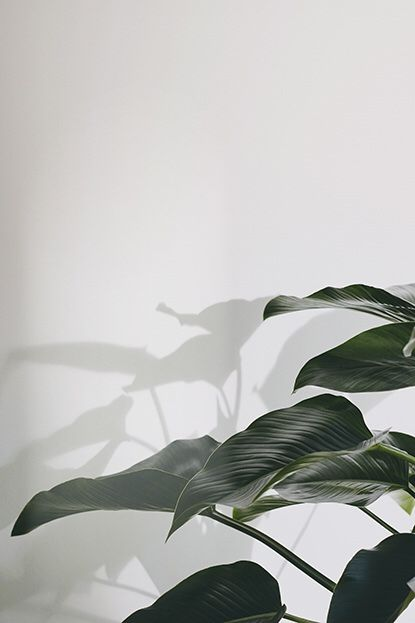 plants and light || @louisefrrs