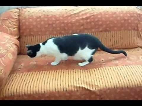 Como hacer un forro rapido para tu sala - YouTube