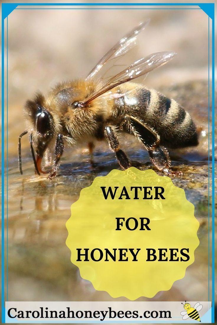 Beekeepers May Need To Provide Water For Honey Bees Carolina Honeybees Beekeeping Water For Bees Backyard Bee Bee Keeping