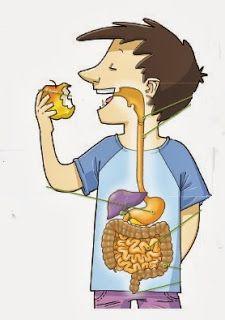 *MIS COSAS DE MAESTRA*: La nutrición I: APARATO DIGESTIVO Y LA DIGESTIÓN