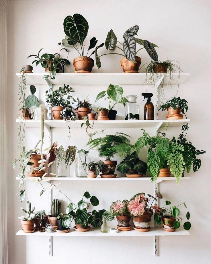 19 Zimmerpflanzen, die urbane Wohnungen überleben können