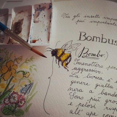 Watercolor naturalistic diary