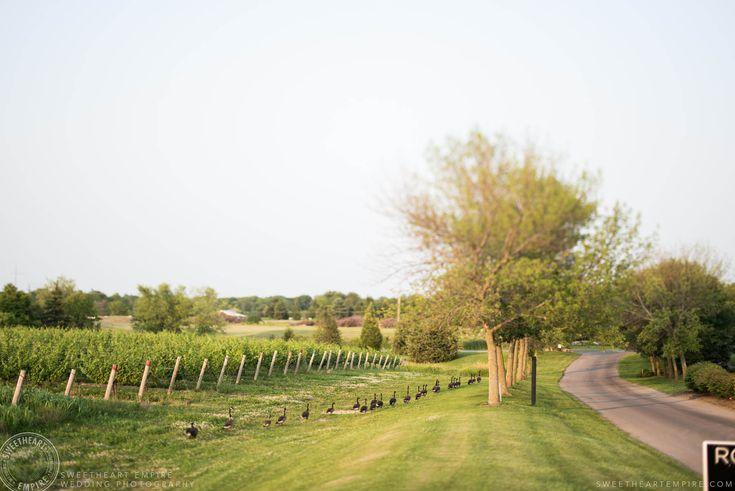 Rockway Vineyards Wedding, Niagara - Beautiful grounds of the vineyard #sweetheartempirephotography