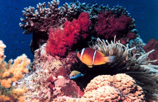 Consejos para visitar los arrecifes coralinos responsablemente, sin causarles daño