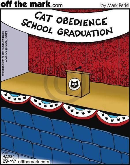 """LOL, this would be SO true if there really were cat obedience schools. It makes me laugh to even say """"cat"""" & """"obedience"""" in the same sentence"""