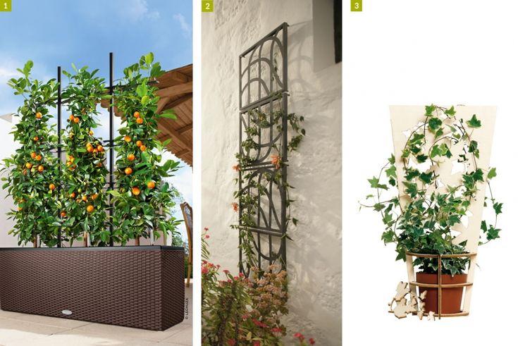 1000 id es sur le th me tuteur plante sur pinterest pied de tomate bourrache et bulbes. Black Bedroom Furniture Sets. Home Design Ideas