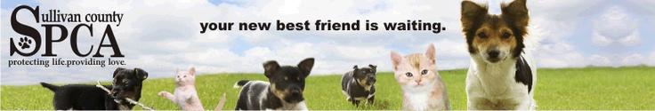 Sullivan County SPCA - Animal Shelter & Adoptions in Rock Hill, NY