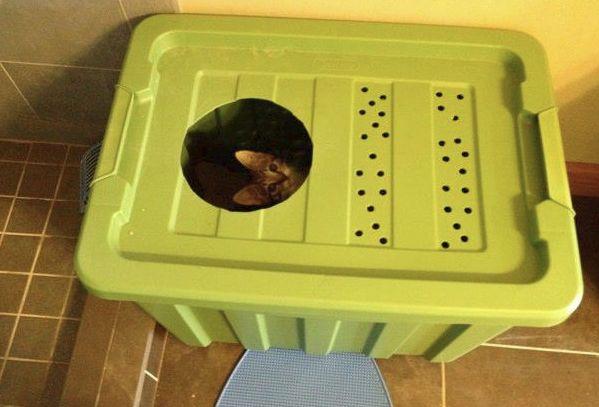 scoop litter box