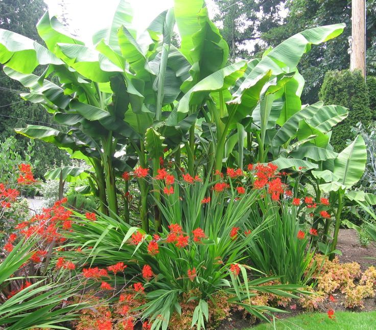 evergreen tropical plants