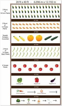 32 best green bean poles images on pinterest green beans for Vegetable bed planner