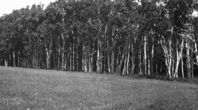 Birches, Park Corner, P.E.I.