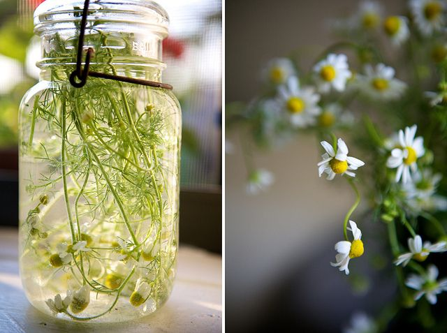 Iced Chamomile Tea Chamomile (Great Relaxation Tea, but avoid if you have ragweed allergies)