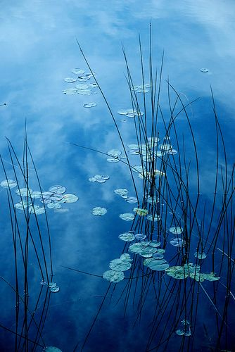 Monet :)                                                                                                                                                      Plus