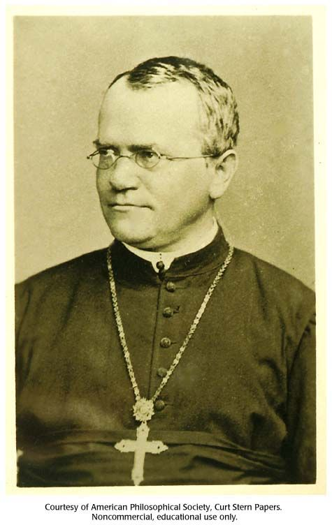 Gregor Mendel: Catholic priest who is considered the founder of genetics. Mendel demonstrated that the inheritance of certain traits in pea plants follows particular patterns, now referred to as the laws of Mendelian inheritance.