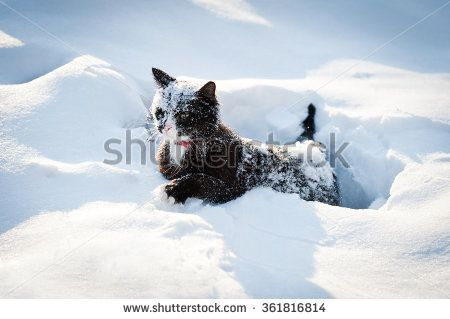 Funny cat walking in a deep snow