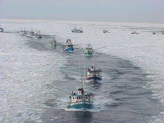 Newfoundland's fisherman coming home