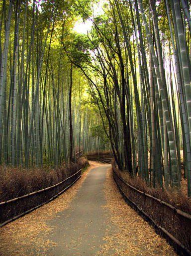 ARTICLE - Kyoto, la ville écologique.