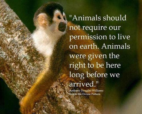 """""""Animals should not required our permission to live on Earth. Animals were given the right to be here long before we arrived."""" / """"Les animaux ne devraient pas avoir besoin de notre permission pour vivre sur Terre. Ils ont gagné leur droit d'être ici longtemps avant que nous arrivions."""" -Anthony Douglas Williams"""