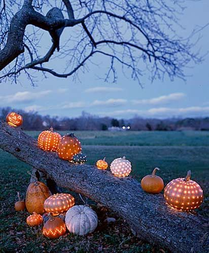 Halloween närmar sig. Passa på att lysa upp trädgården med pumpor och ljusslingor. Garanterad mysfaktor i trädgården!
