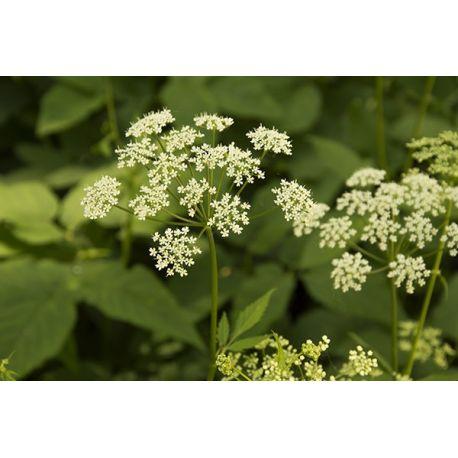 Obraz na płótnie - Białe kwiaty - dostępny w rozmiarach 150x100, 120x80, 90x60, 60x40, 40x26 #fedkolor #obraznapłótnie #wydruknapłótnie #twojezdjęcie #napłótnie #kwiaty #kwiatki #natura #rośliny #zdjęcie #fotografia #dopokoju #dosalonu #pomysłnapokój #dekoracje #ozdoby