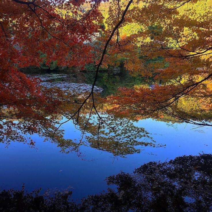 Осенний вид на большой пруд Рёандзи #momiji  #ryoanji #midokoro #мидокоро #рёандзи #киото #япония #момидзи #осень #пруд #сад #парк #японскийсад